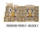 Pissouri Vines 5
