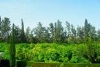 Таунхауз в Пафосе #005