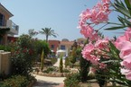 Таунхауз в Пафосе #027