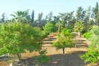Таунхауз в Пафосе #043