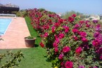 Вилла в Пафосе #010